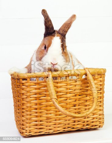 Cute ginger bunny in a basket on white wooden background