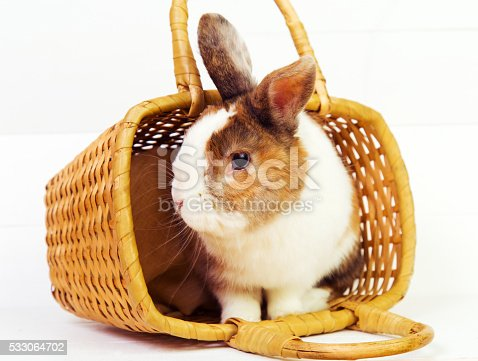 Cute ginger bunny in a basket on wooden background