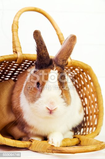 Cute spotted bunny in a straw basket on white wooden background
