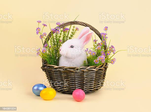 Bunny in a basket with flowers picture id164381024?b=1&k=6&m=164381024&s=612x612&h=mumzozu19mzitnso 2k yulxqih q62zs5aaoduxjhy=