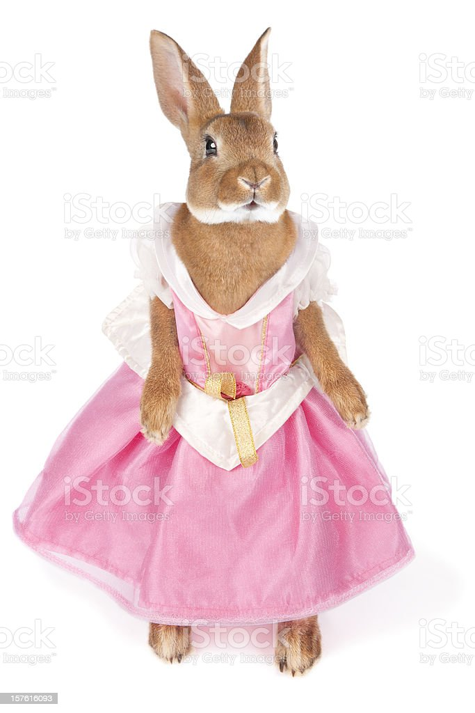 Bunny in a dress royalty-free stock photo
