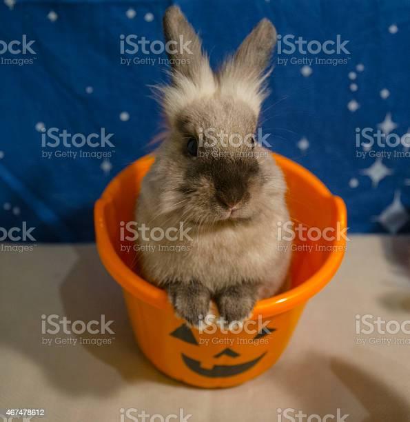 Bunny in a halloween bucket picture id467478612?b=1&k=6&m=467478612&s=612x612&h=8tlwuo8fhbwrhkhwgykekan5 0tdsn3k721ydzw6yms=