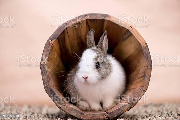 Bunny in a wooden flower pot picture id507182918?b=1&k=6&m=507182918&s=612x612&h=wg9jrloeb3f97ggieq9ix0knb9ythpedyje2m rivya=