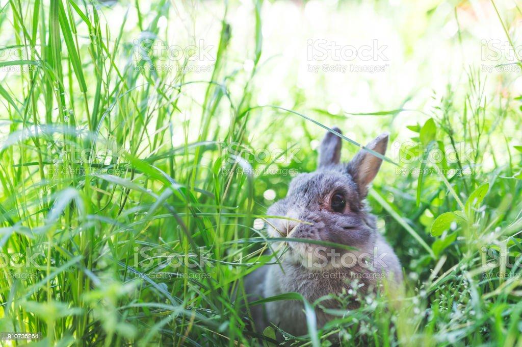 Bunny in the Wild stock photo
