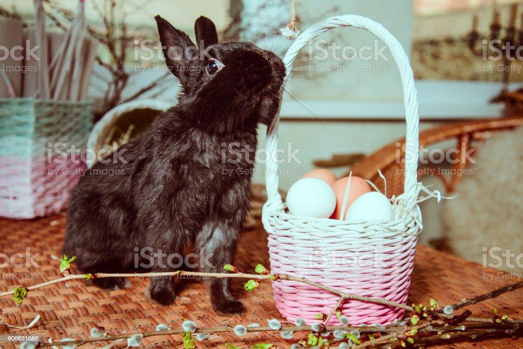 bunny near basket with eggs stock photo