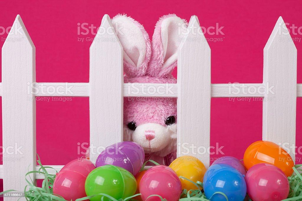 Bunny peeking through fence stock photo