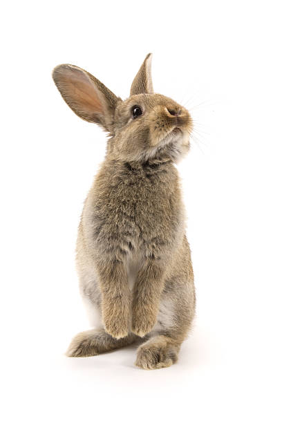 bunny - rabbit stock photos and pictures