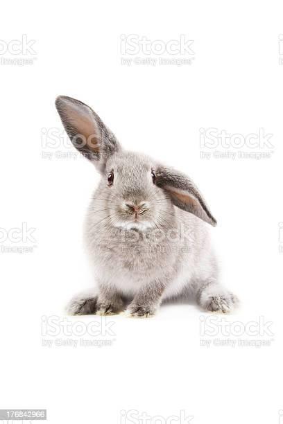 Bunny picture id176842966?b=1&k=6&m=176842966&s=612x612&h=av5na45a2tknt4uhg0nj5v5yonxenhiizy5abqnzpjq=