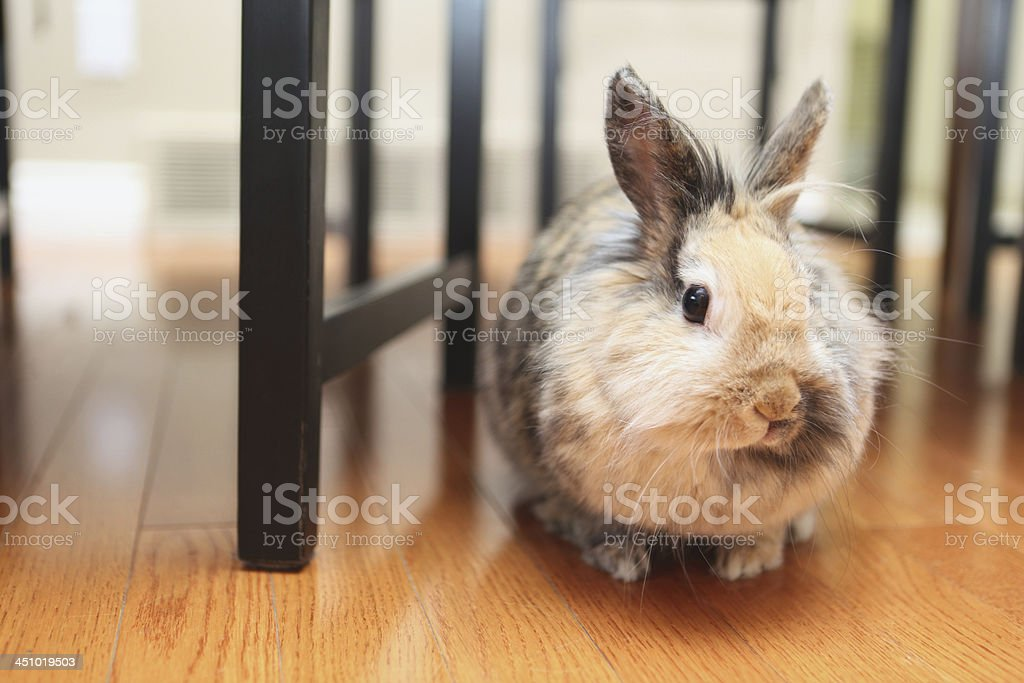 bunny royalty-free stock photo