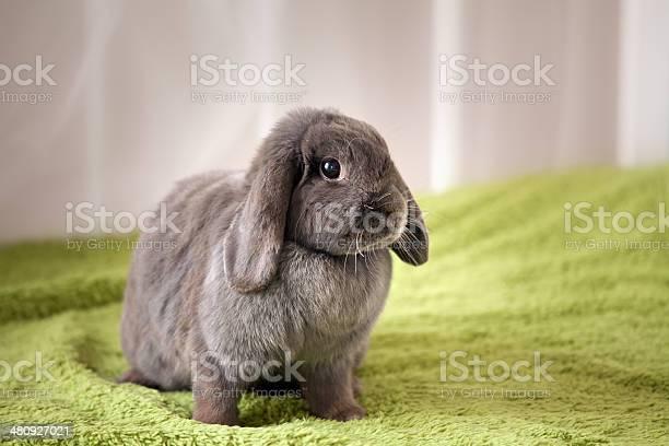 Bunny picture id480927021?b=1&k=6&m=480927021&s=612x612&h=wonc i2jci3to8okkoonczeh7oi9fmpi6p1wqtcnjyu=