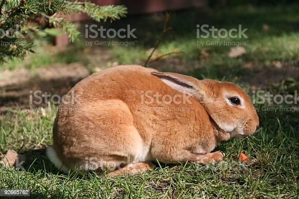 Bunny picture id92665762?b=1&k=6&m=92665762&s=612x612&h=teqifeqhzmup4bjstulgclk8f1upicjgaq0876n7xsy=