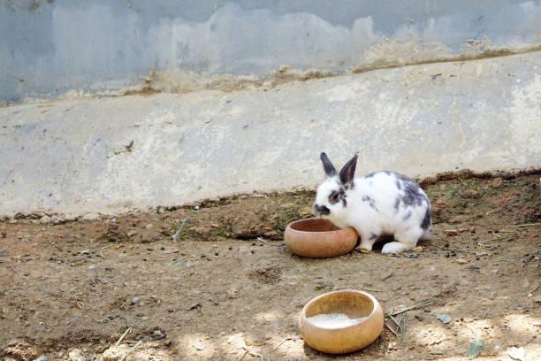 bunny rabbit eating food in the cage - plüschhase stock-fotos und bilder
