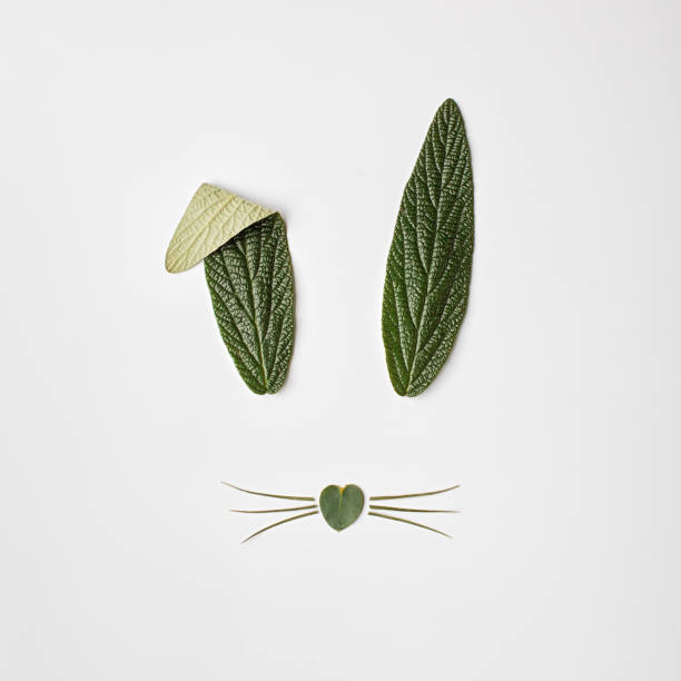 Bunny rabbit face made of green leaves on white background. stock photo