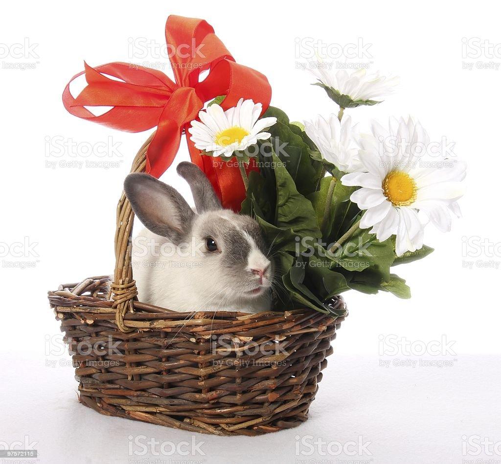 Bunny lapin avec panier en osier photo libre de droits