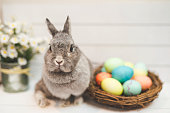 A baby bunny rabbit watches over a basket of multicolored Easter. The basket is setting on a white wood table and the background is white. The adorable bunny is in the foreground with eyes wide open and ears perked up as she looks toward the camera.