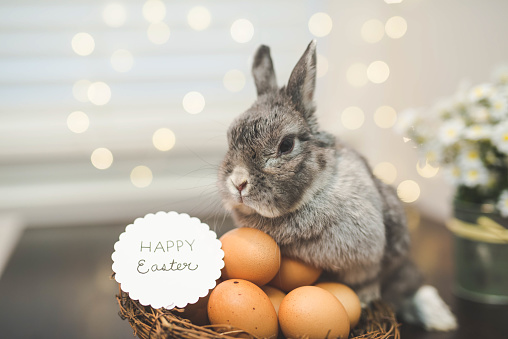 A baby bunny rabbit watches over a basket of brown Easter eggs with a handwritten sign that says