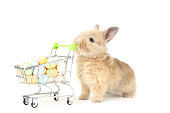 Bunny rabbit with easter eggs in shopping cart on white background