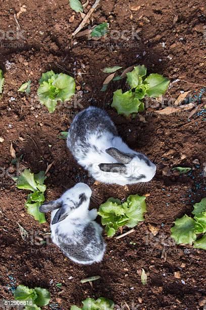 Bunny rabbits in garden picture id512908816?b=1&k=6&m=512908816&s=612x612&h=qgri nwgdkurlzqoc78zsi7e8hfbzm8bstpvgcgaq6i=