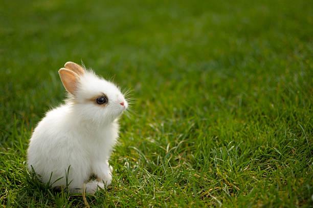Lapin assis dans l'herbe - Photo