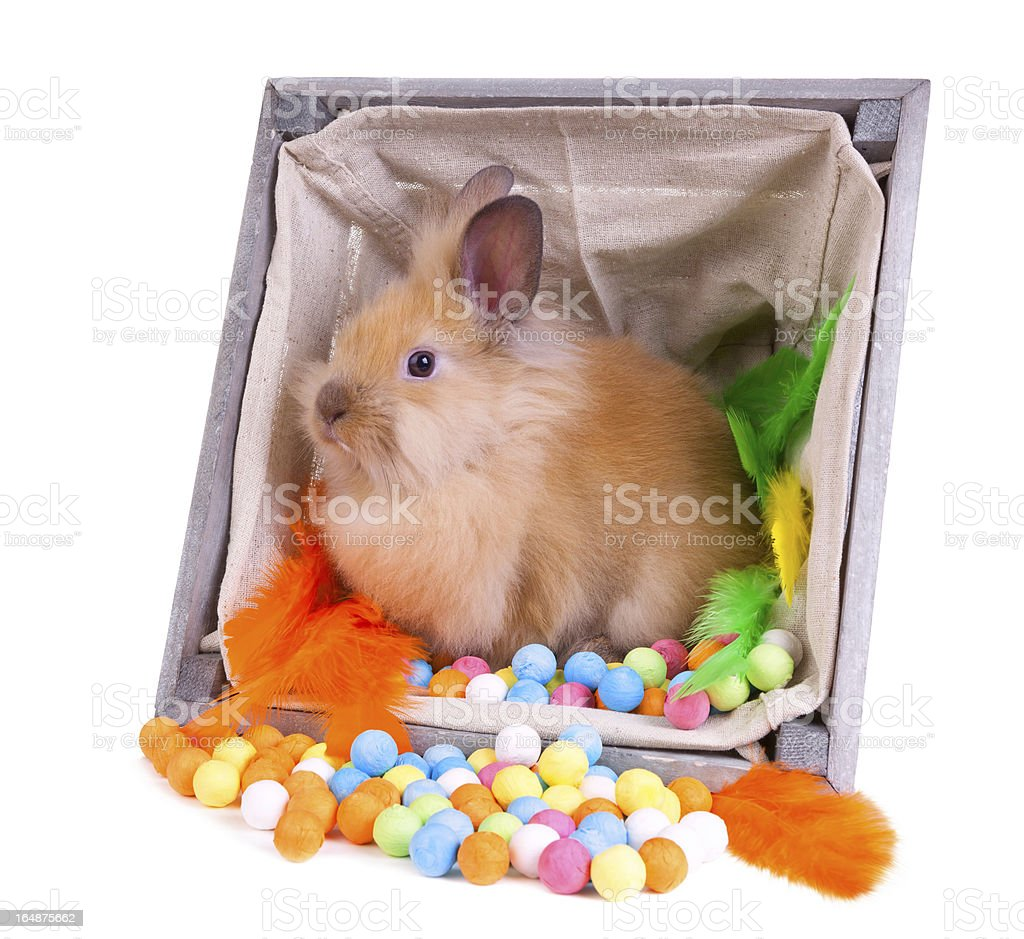 Bunny sitting inside a vintage wooden box with colorful decorati royalty-free stock photo
