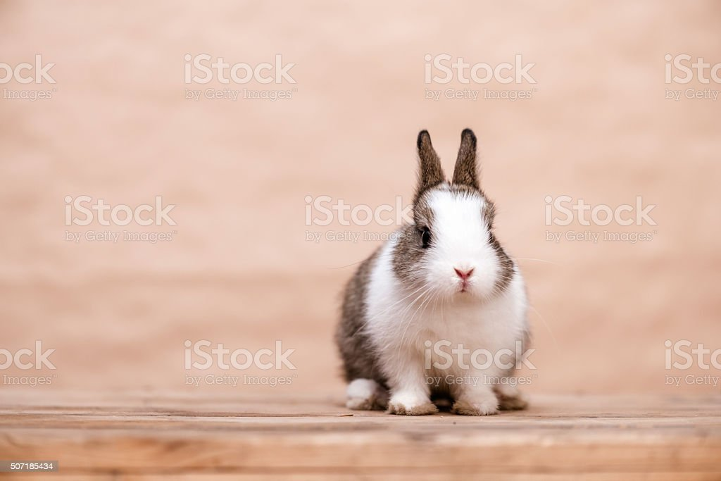 Bunny sitting on a wooden chest stock photo