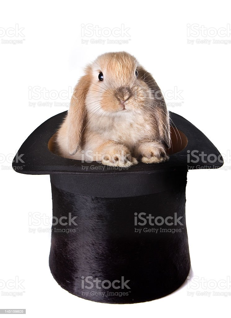 Bunny surprise royalty-free stock photo