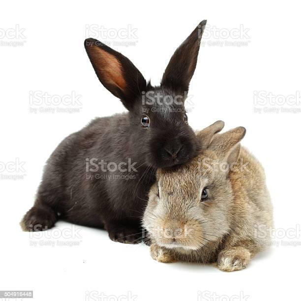 Bunny white isolated picture id504916448?b=1&k=6&m=504916448&s=612x612&h=o1twdtqzosnliycg02r3sfvpb69ecwkogndwtekkgo4=
