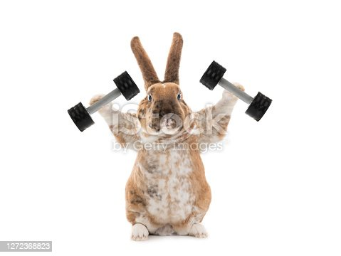 istock Bunny with dumbbells isolated on a white background. 1272368823