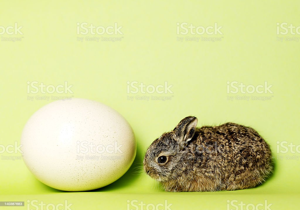 bunny with egg royalty-free stock photo