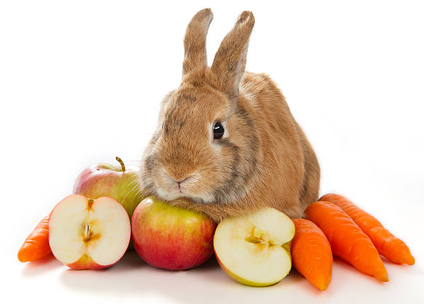 Bunny con verduras frescas - foto de stock