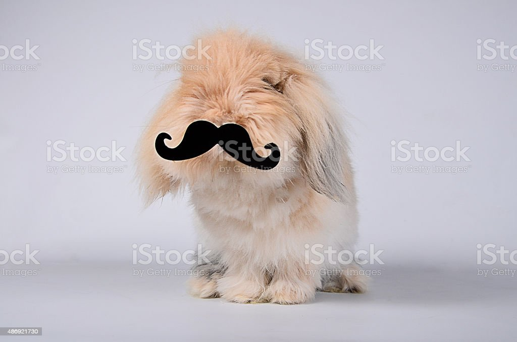 Bunny with mustache stock photo