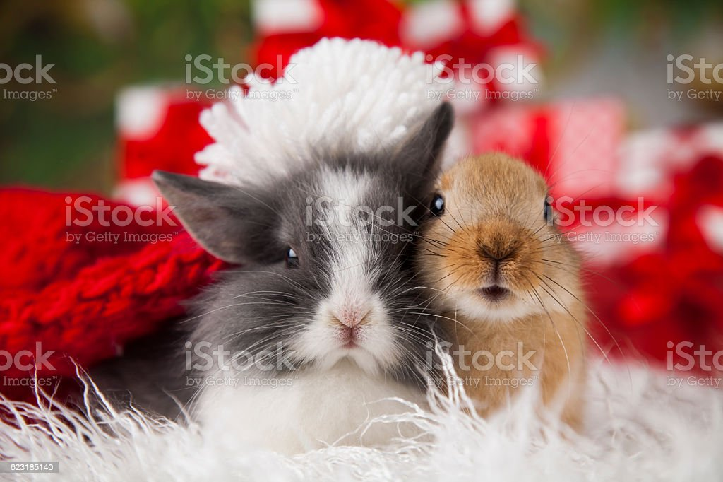 bunny with rabbit christmas red santa hat on winter decoration royalty free stock photo