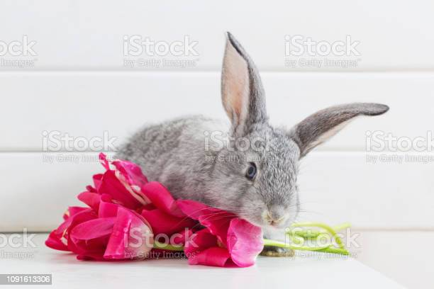 Bunnyes and pink tulips on white background picture id1091613306?b=1&k=6&m=1091613306&s=612x612&h=bayotcczxb swayqdvfz0opbiomsczcjt5wvpl7vzsy=