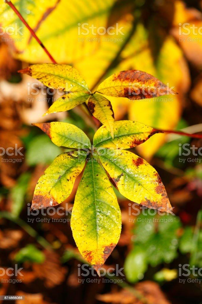 bunt verfärbtes Herbstlaub stock photo