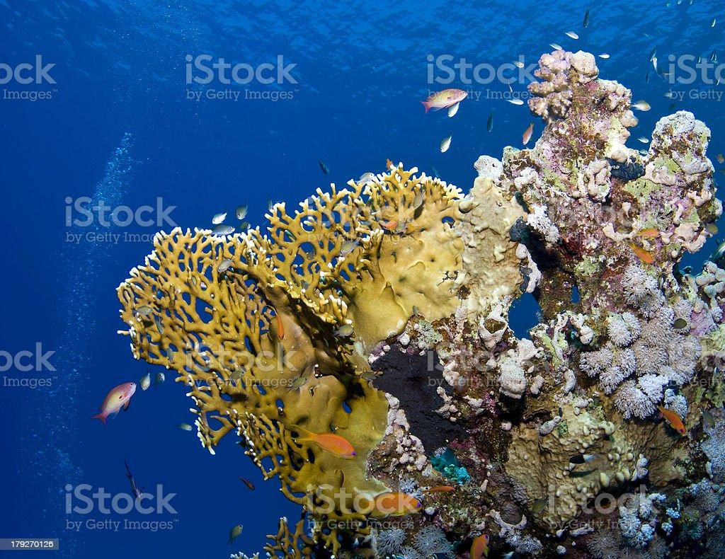 Bunte Unterwasserwelt - underwater life royalty-free stock photo
