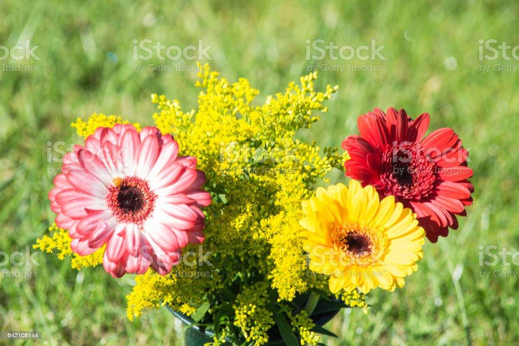 Bunte Verschieden Farbige Herbstblumen Stock Photo More Pictures