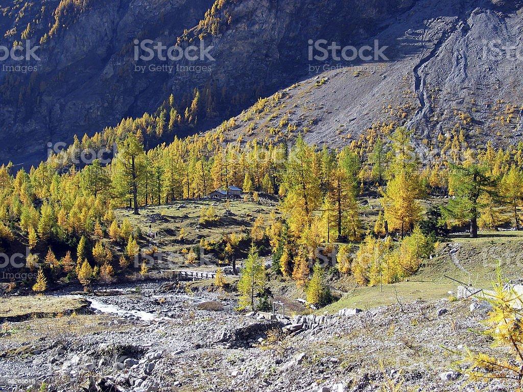 Bunter Lerchenwald im Herbst royalty-free stock photo