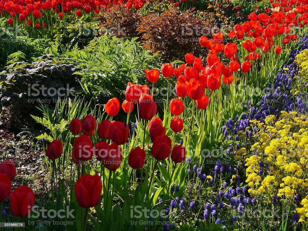 Multi colored flowering dogwood – Foto