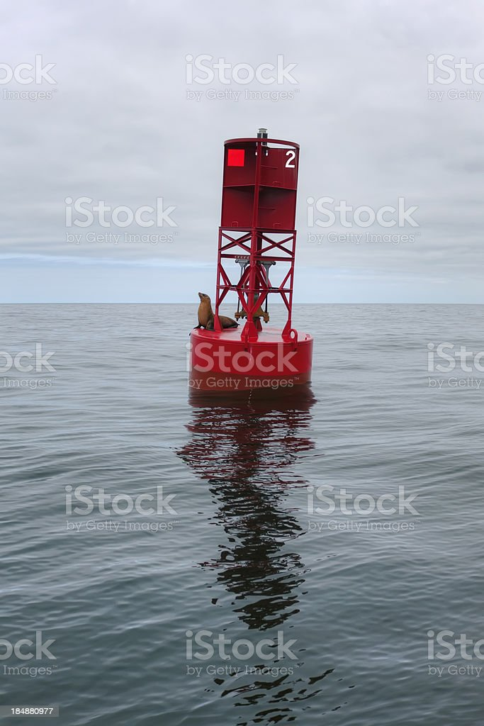 Buoy and Sea Lion stock photo
