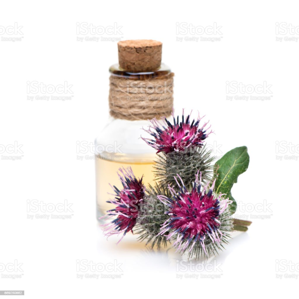 Burdock oil and burdock flowers on a white background - foto stock
