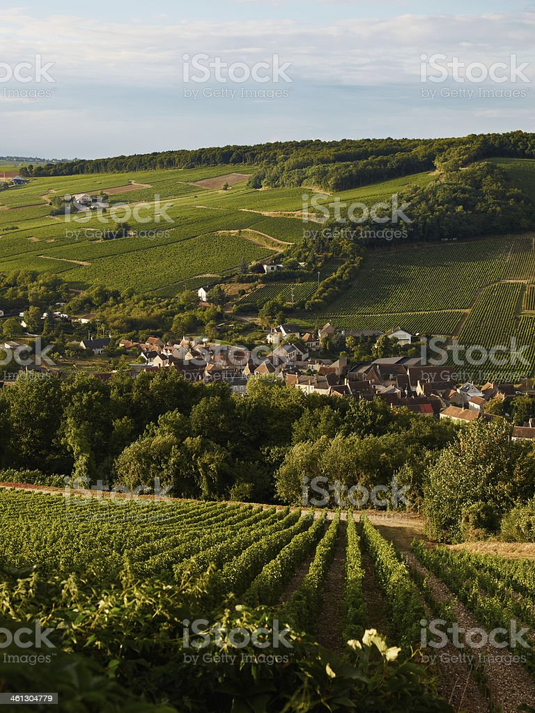 Burgendy Vineyard stock photo