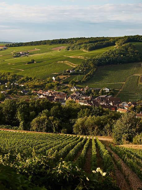 Burgendy Vineyard stock photo