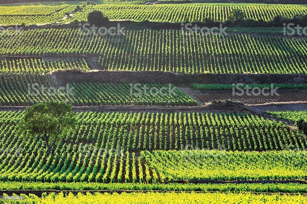 Burgundian vineyards, France stock photo