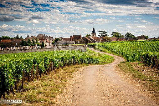 Burgundy: scenic road that crosses the wine region and introduces us to the main producers and their vineyards. France