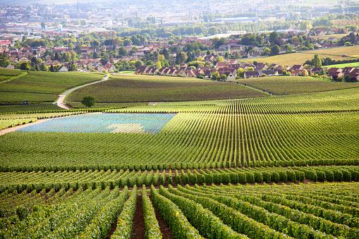 Les appellations des vins de Bourgogne