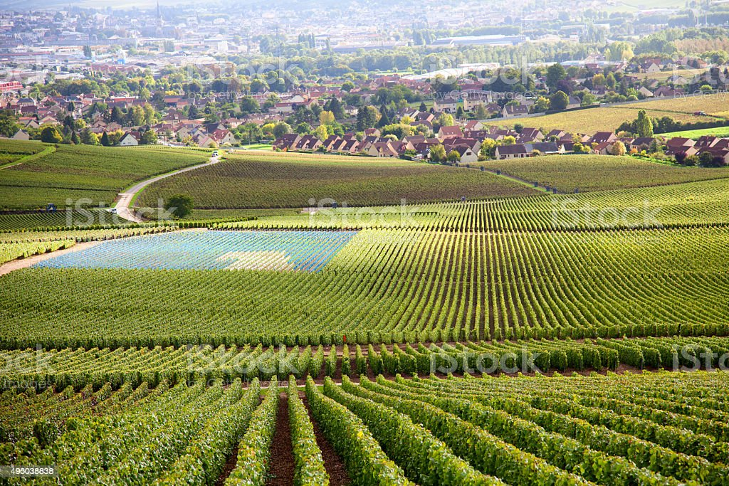 Burgundy region stock photo