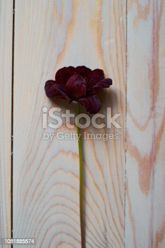 burgundy flower on wooden background