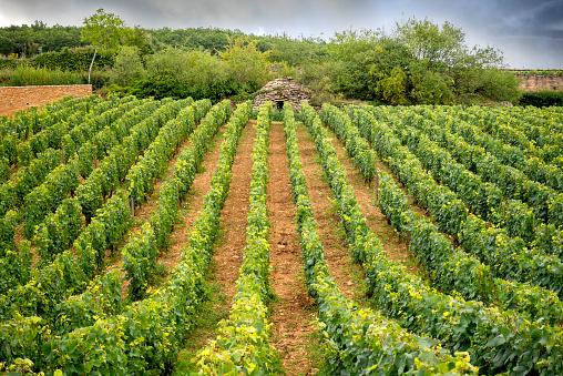 Chassagne Montrachet, grand vin de Bourgogne