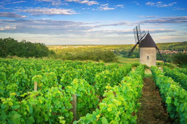 Burgundy Vineyard and Windmill near Santenay - France stock photo