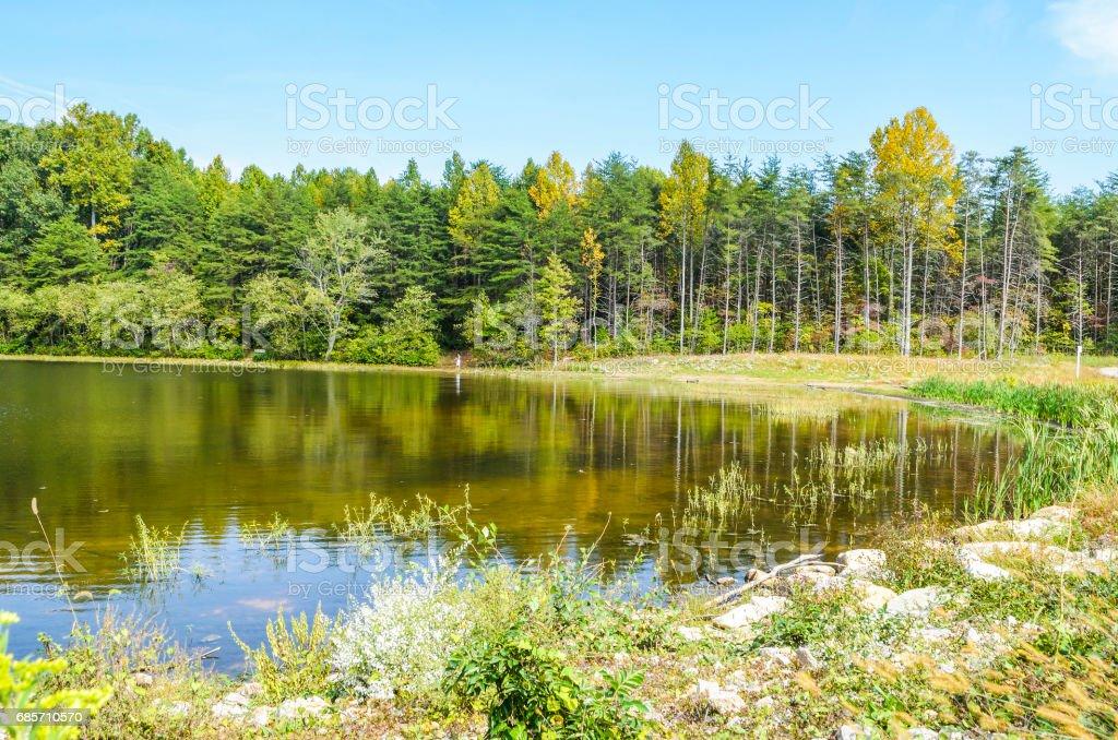 평화로운 풍경에 여름 동안 물으로 버지니아에서 버크 호수 풍경 royalty-free 스톡 사진